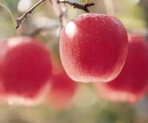 吃什么水果可以减肥 不用挨饿也能瘦