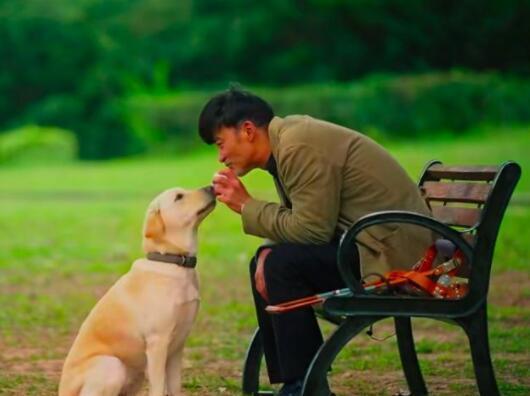 《小Q》票房破亿 导盲犬和主人的情感成为泪点4.jpg