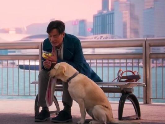 《小Q》票房破亿 导盲犬和主人的情感成为泪点3.jpg