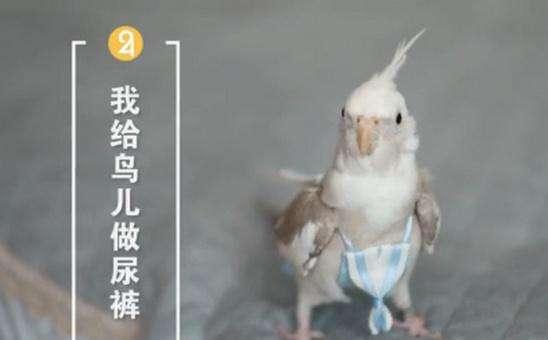 女孩做鸟用尿不湿月入3万,鸟用尿不湿创新实用还受欢迎1.jpg