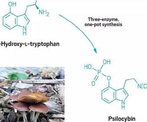神奇蘑菇可缓解抑郁症 给抑郁患者带来新福音