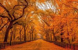精选描写秋的诗句